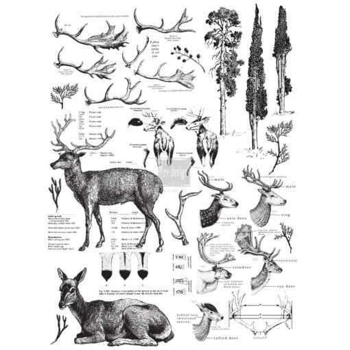 deer size display