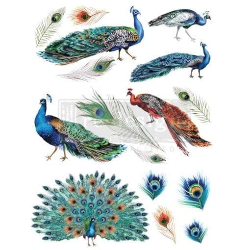 peacock dreams transfer